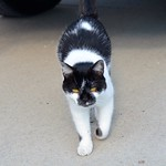 The novitiate cat!
